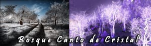 bosque_canto_cristal_real_peque