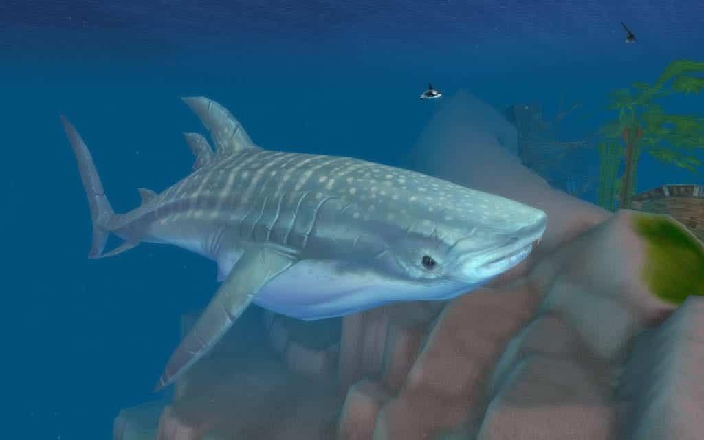 tiburon_ballena_cataclysm