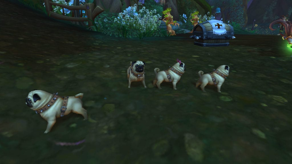 cajón de cachorros adoptados